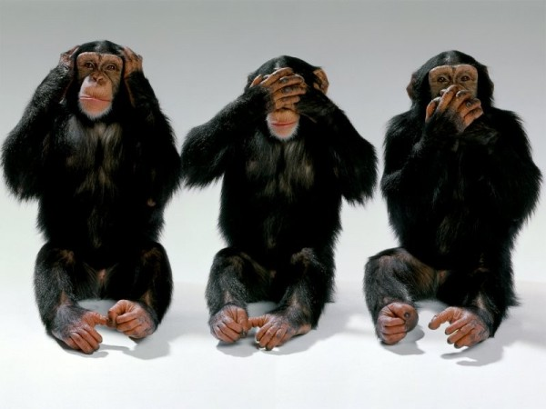 8096774-wildlife-monkeys-hear-no-evil-see-no-evil-speak-no-evil1