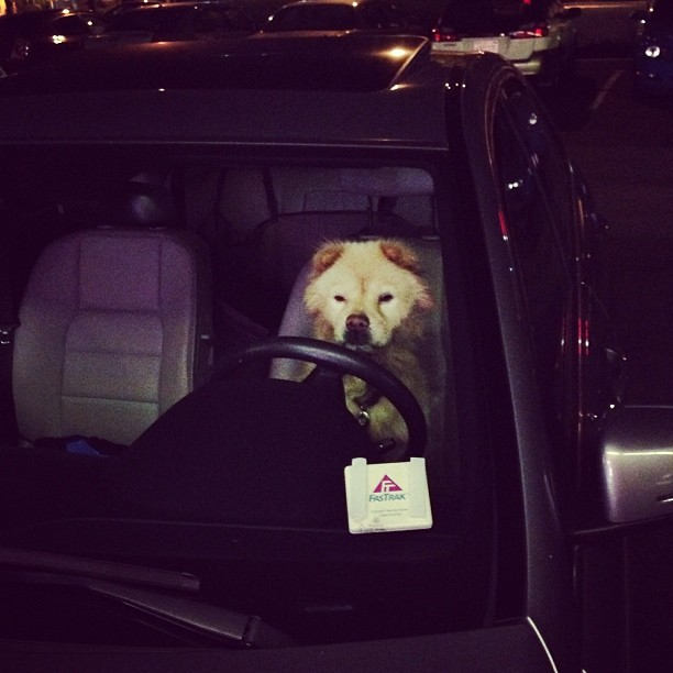 Dog-signated Driver