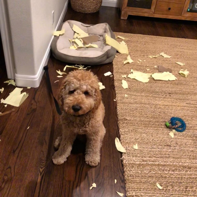 Dog ate my homework.